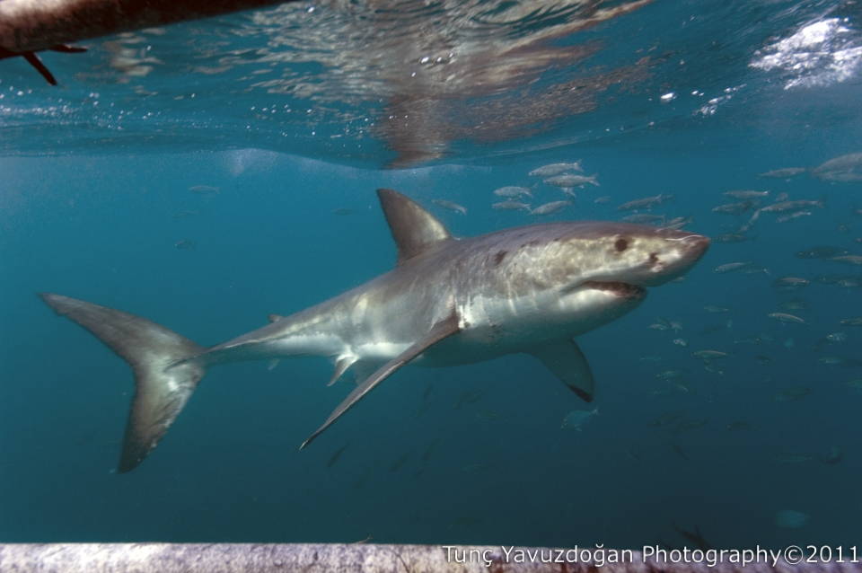 Shark attack due to fins?