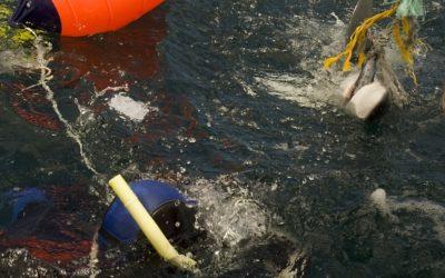 mavi Köpekbalılarını besleme ,ayışığı dalış merkezi