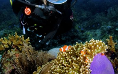 sipadan anemone