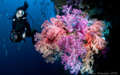 coloured soft coral achropora