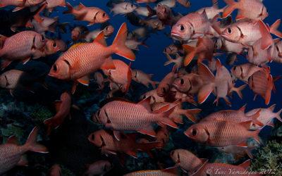 Squirel Fish