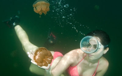 Lady diver in red Bikini with jelly fish in palau