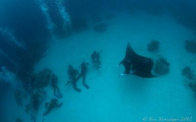 Manta Cruising Palau