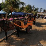Horse carriage at Gili Trawangan Island